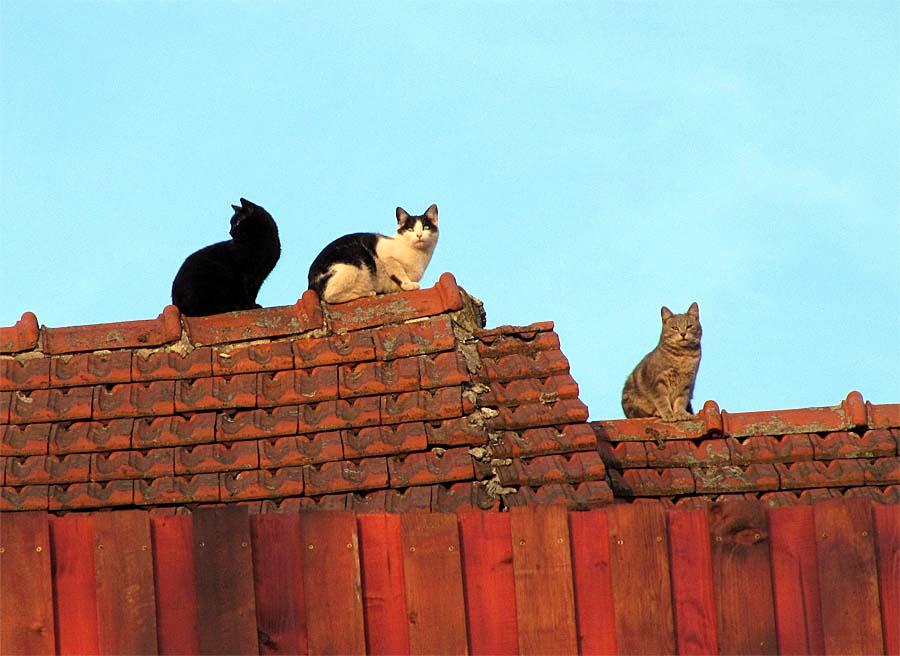 zdarma hd těsný kočička